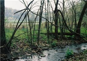 A small stream in the foreground lined with tangled small trees, in the background is a level are with standing water and fields edged by forest