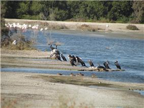 Ras-al khore wildlife sanctuary-4.JPG
