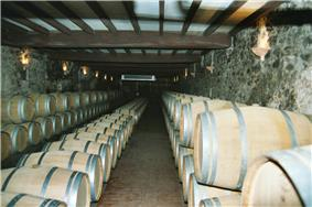 Colour photo showing an aging cellar for Sauternes (sweet white wine).  The barrels are aligned in three rows against the walls and they are stacked on two levels with a row in the middle one barrel high.  The light coloured barrels are newer barrels.  The floor is tiled, the walls are stone, covered in grey mould, and the ceiling is white supported by dark coloured beams.  The wall lighting is reminiscent of medieval torches.