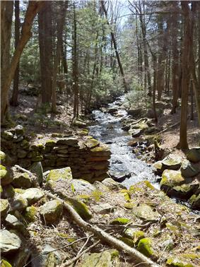 Forested brook