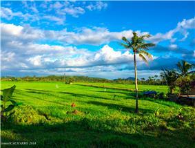 Rice field in Pagsulhugon, Babatngon