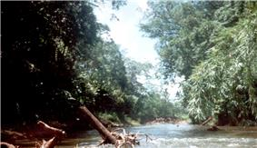 River through dense vegetation. Many tree trunks are lying in the river.