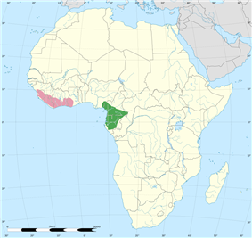 A map of Africa highlighting the distribution of the white-necked rockfowl near the coast line of West Africa from Guinea to Ghana.