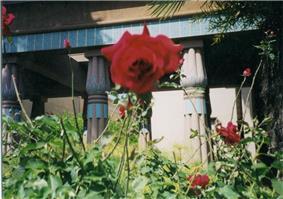 Rosicrucian Park flower.jpg