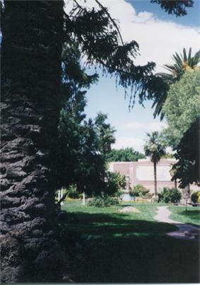 Rosicrucian Park tree side.jpg