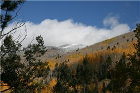 Aspens and snow-capped mountains in late fall.
