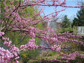 Sayen Park Botanical Garden