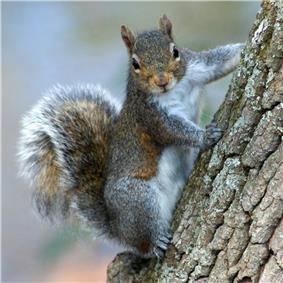 Squirrel oriented vertically