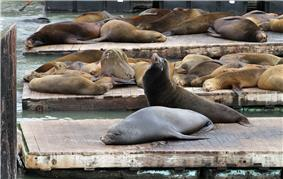 Photo of sea lions crowded together on dock