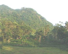 Forested hilly landscape.