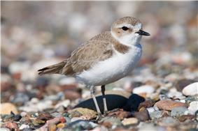 small bird on pebbles