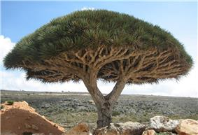 A tree over a dry, barren, rocky landscape.