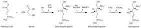 Sphingosine synthesis