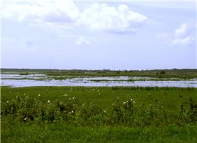 The river as a shallow and ill-defined channel dominated by grasses and weeds with few trees; white birds are present in the foreground