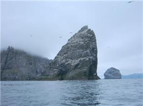 White birds wheel around a tall and precipitous grey sea stack that is partly covered in guano. Cliffs on the left are shrouded in mist and another stack lies further away at right.