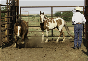 Stock horses in corral.png