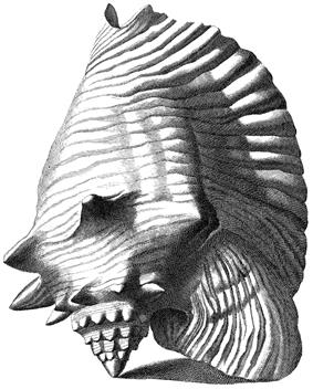 Similar shell viewed from the side opposite the aperture