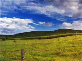 Cornfield, pasture and hayfield in Sullivan Township