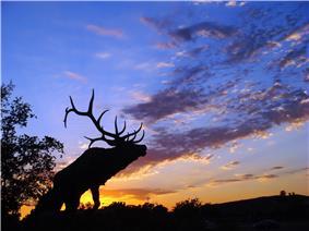 Sunset on Laguna Blvd, Elk Grove