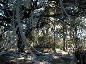 Cottingham Forest rolled