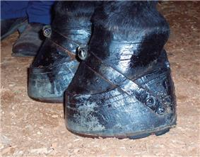 A horse's hoof, held onto a thick stack of pads with a band running over the top of the hoof.