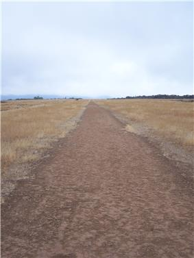 A straight dirt path leading off into the distance with brown weeds surrounding it
