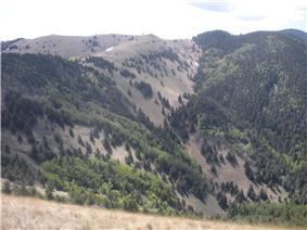 Partially forested mountains in Lincoln National Forest.