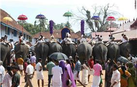 Thrippunithura-Elephants11 crop.jpg