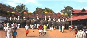 Thrippunithura-Elephants4 crop.jpg