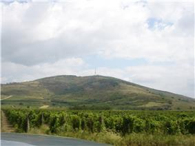 Colour photograph showing the terrain of Tokay.  The vineyard is backed by a mountain, an ancient extinct volcano, giving a terrain of high quality for growing grapes.