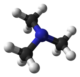 Ball and stick model of trimethylamine