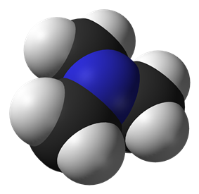 Spacefill model of trimethylamine