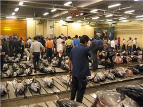 Tsukiji Fresh Tuna Auction.JPG