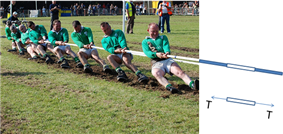 9 men in the Irish champion tug of war team pull on a rope. The rope in the photo extends into a cartoon showing adjcant segments of the rope. One segment is duplicated in a free body digrapm showing two forces of magnitude T pulling the segment in opposite directions.