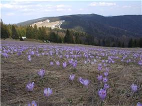 Turbacz Mountain in the Gorce Range