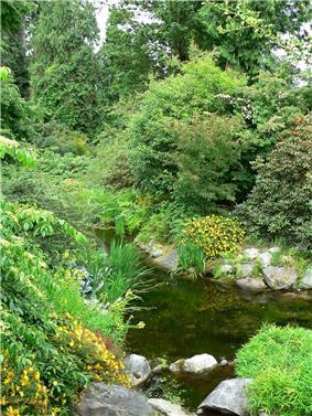 UBC Botanical Garden water.jpg