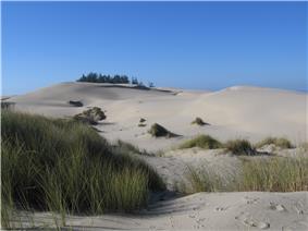 Sand dunes at Oregon Dune National Recreation Area.