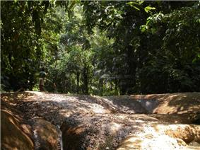 Rocky ground within a tropical forest.