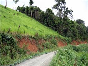 A rice field rises along a steep slope on the left side of a small road. In the background, the remaining forest can be seen.