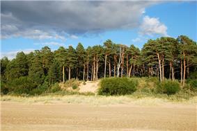 Sand beach lined with pine trees at Narva-Jõesuu.
