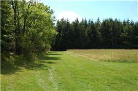 A mowed field in the center, an unmowed field at right, woods at left and in the background