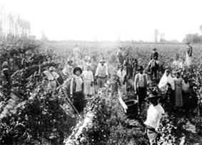 Harvest in the San Juan Region 1890