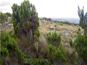 Vertical Bog Mt Kenya.JPG