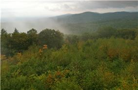 Forest vista with rising mist