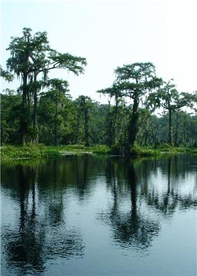 Wakulla Springs Archeological and Historic District