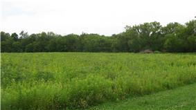 Scenery at the Wapello Land and Water Reserve