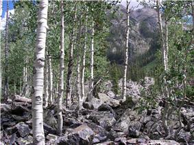 Aspen Weminuche Wilderness