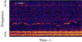 Spectrogram of the Whistle sound