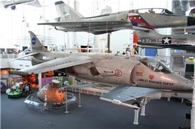 Kestrel on museum display