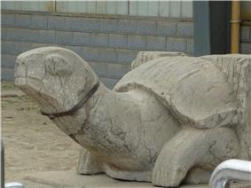 Xiao Xiu - SE turtle - P1070558.JPG